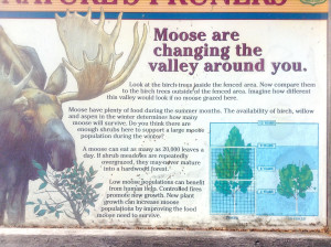 Moose sign russian river