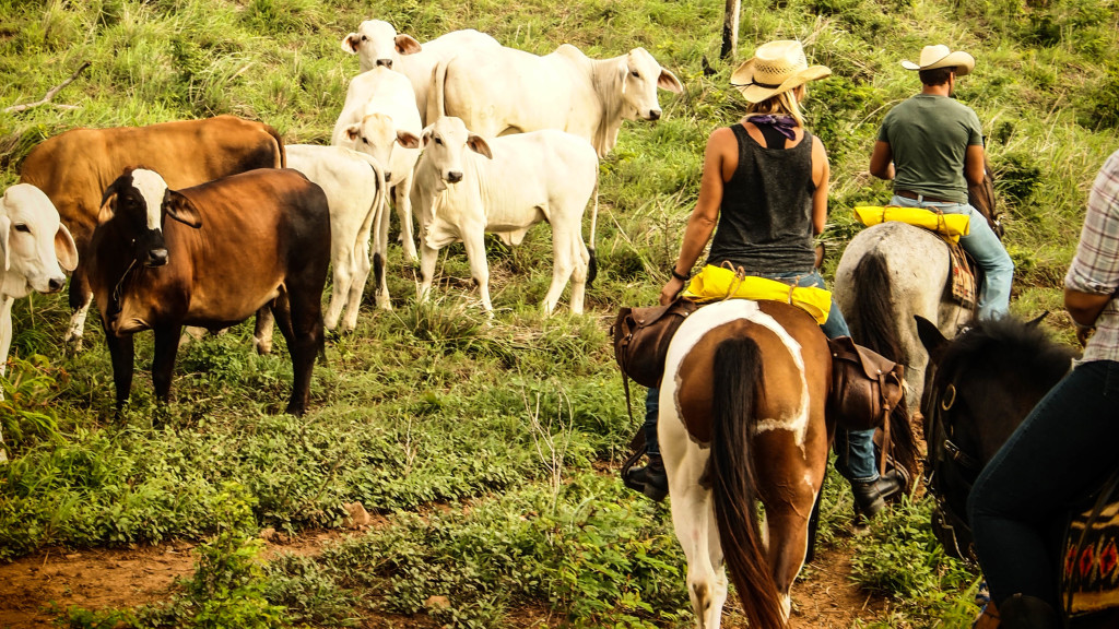 Christine West, fins to spurs, san juan del sur, nicargua, Christien with cattle