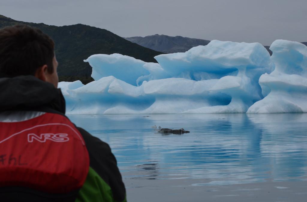 Adam Maire, fins to spurs, diner with travelers, kayaking, alaska