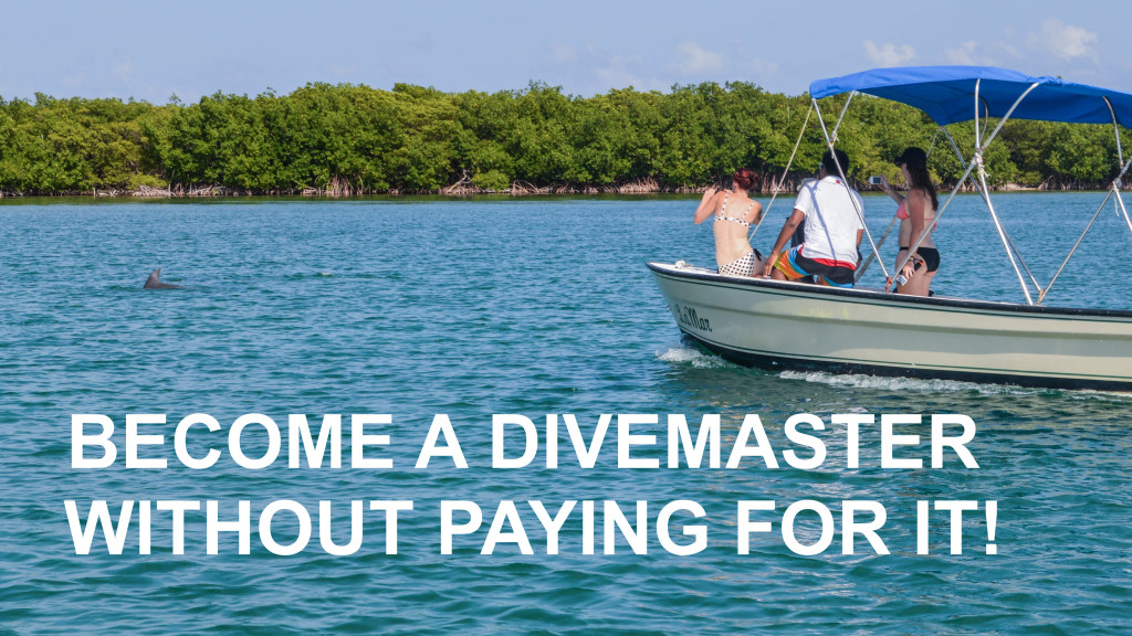 Fins To Spurs, Become A Divemaster, Become a Divemaster Without Paying For It, Belize