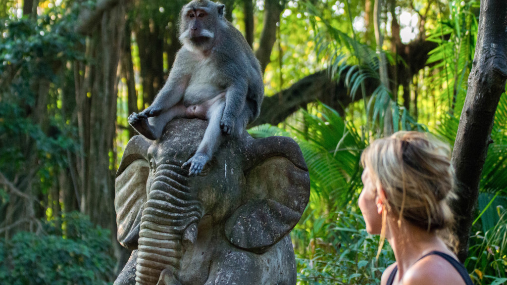 Fins to Spurs, Ubud, Bali, Monkey Forest, Monkey and Christine West