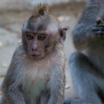 MONKEY FOREST: EXPERIENCE THE SANCTUARY IN UBUD, BALI