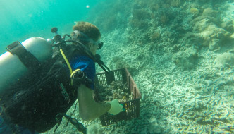 BUILD REEFS IN BORNEO: VOLUNTEER ON YOUR DIVE HOLIDAY!