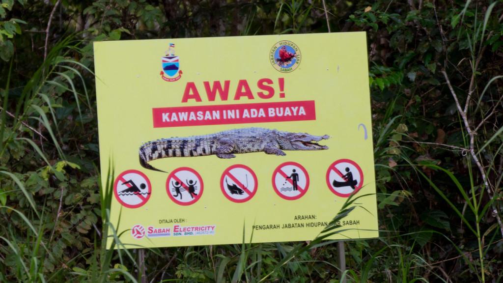 Crocodile, Borneo, Malaysia, Fins to Spurs, Go to Borneo