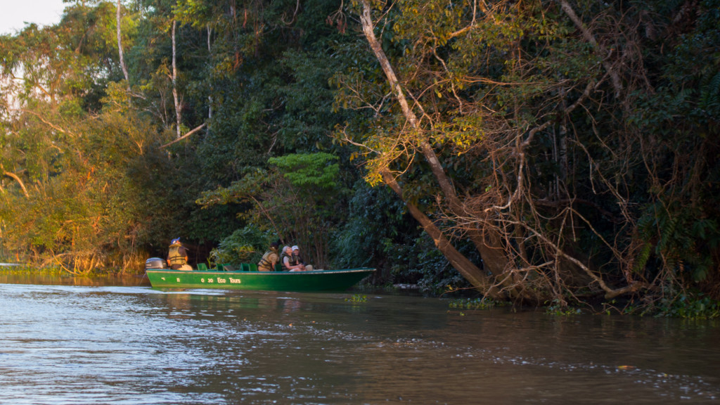 Kinabatangan, River, Borneo, Malaysia, Fins to Spurs, Go to Borneo