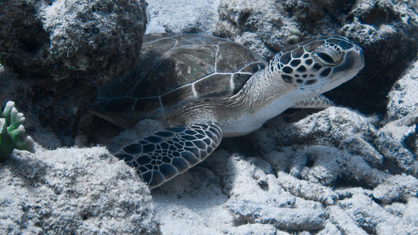 turtle ocean cleanup